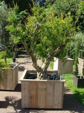 Verrijdbare Plantenbakken Voor Buiten.Potterie Plantenbakken De Olijfgaard